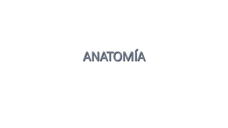 Anatomia Perinanal