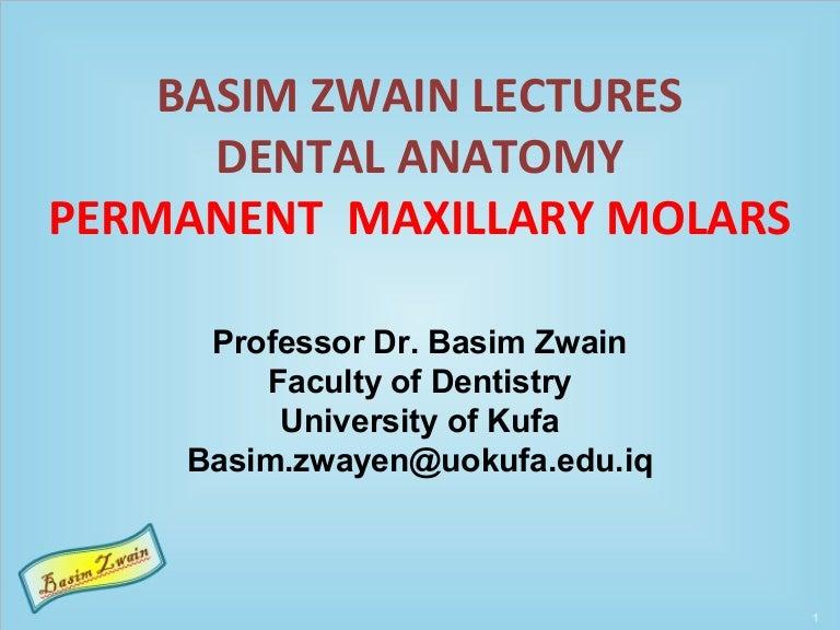 Permanent Maxillary Molars