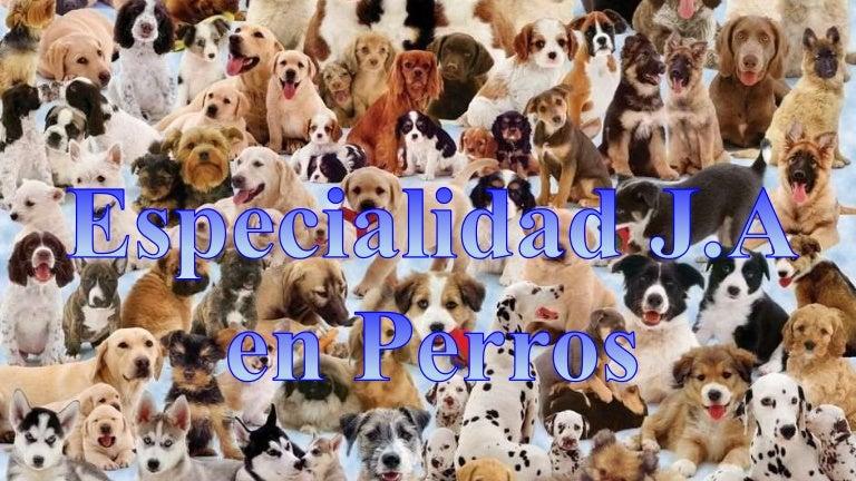 Especialidad J.A en Perros