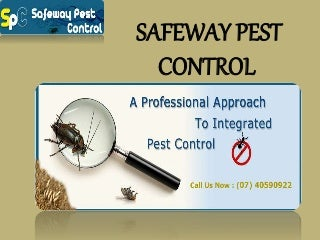 Get Best Results from Pest Control Termites