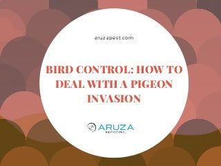 Bird Control: How to Deal with a Pigeon Invasion - Pest Control - Charlotte NC
