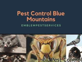 Cleaning termite Infestation with Termite Control Penrith