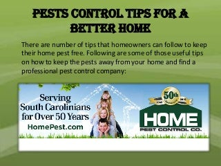 Pests control tips for a better home - Pest control Columbia