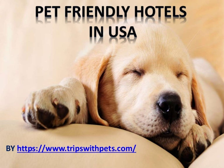Pet Friendly Policies Pet Friendly Hotels Guide