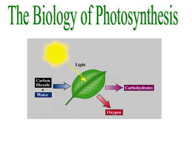 Photosynthesis ccuart Image collections