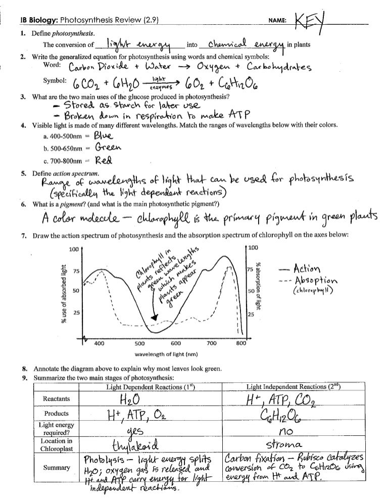 Photosynthesis Review Key 29 – Photosynthesis Review Worksheet Answers