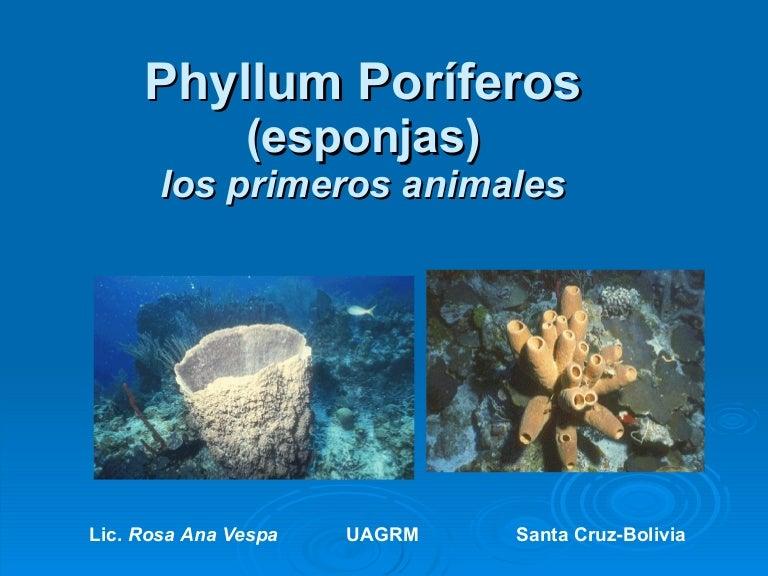 Phyllum poríferos