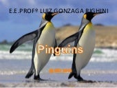 Pinguins-2º C