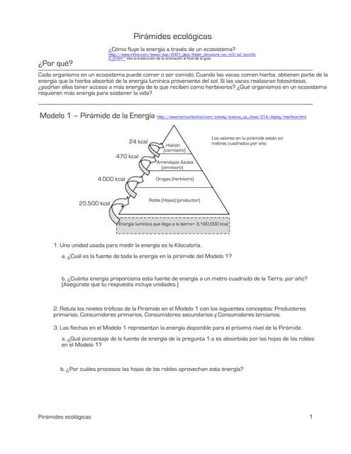 Pirámides ecológicas. Una guía para primero medio, biología, de la …