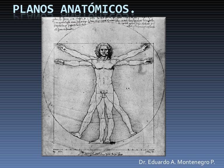 Planos Anátomicos TR2