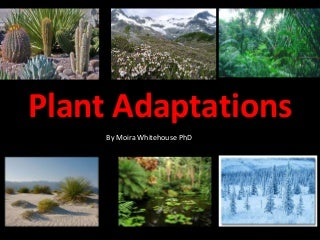 Plant adaptations (teach)