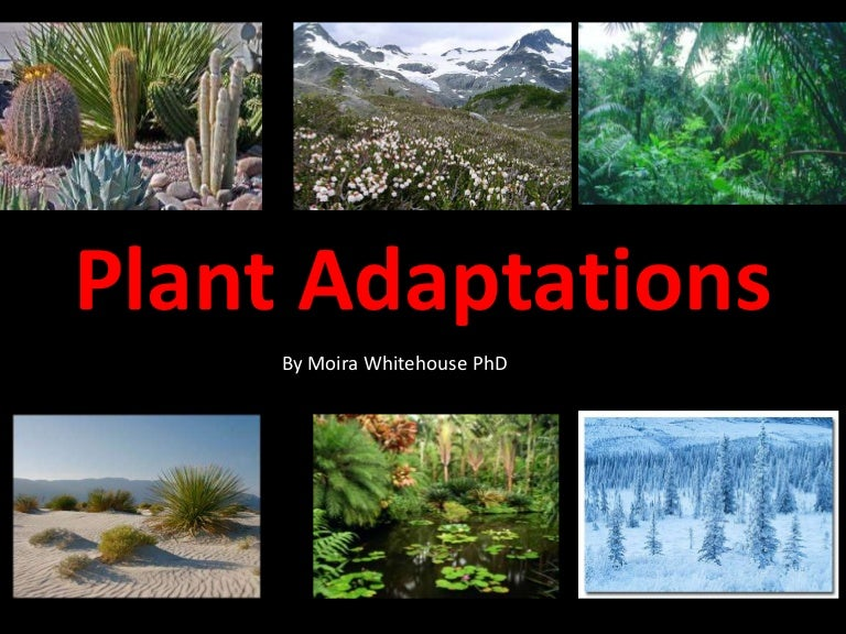 Worksheets Plant Adaptations Worksheets 5th Grade plant adaptations worksheet sharebrowse adaptation sharebrowse