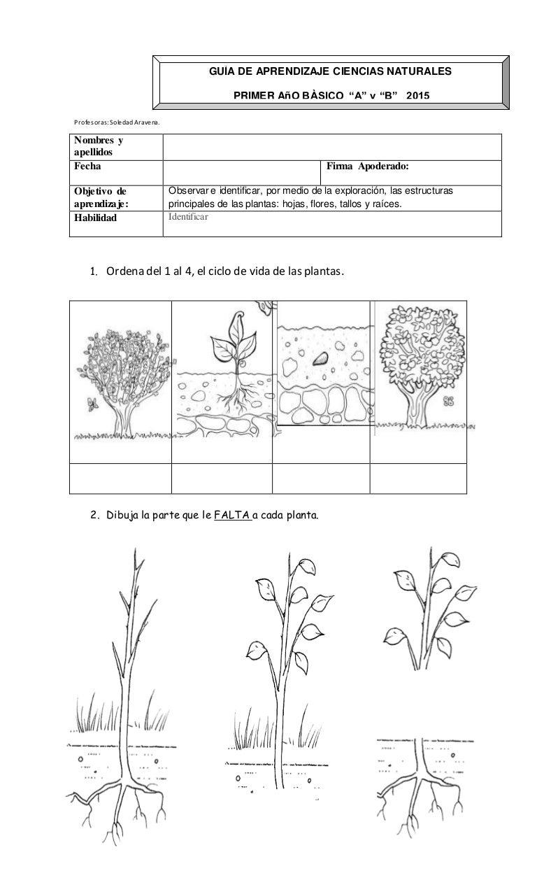 Bonito Planta Colorear Páginas Ciencia Viñeta - Enmarcado Para ...