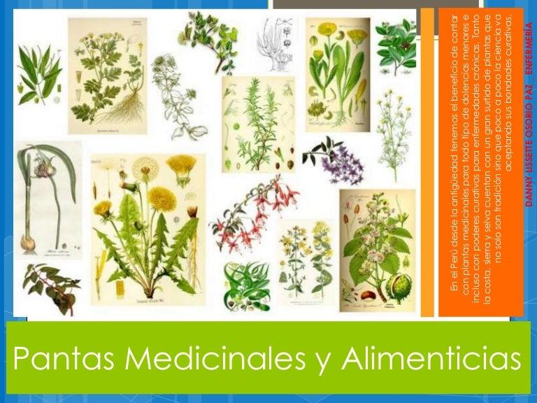 Plantas medicinales y alimenticias for Plantas ornamentales con sus nombres lamina