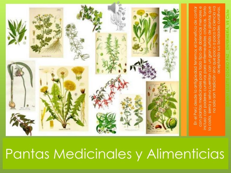 Plantas medicinales y alimenticias for Plantas ornamentales y medicinales