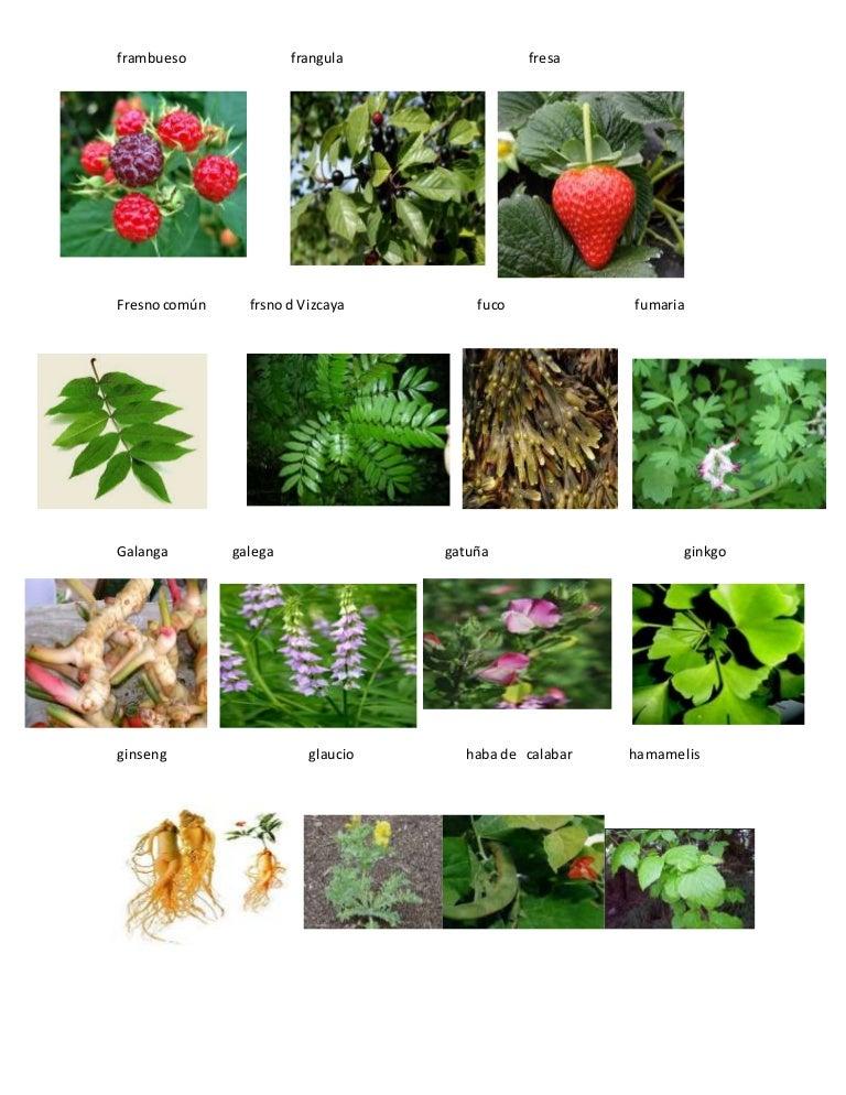 Plantas medicinales for Plantas decorativas con sus nombres