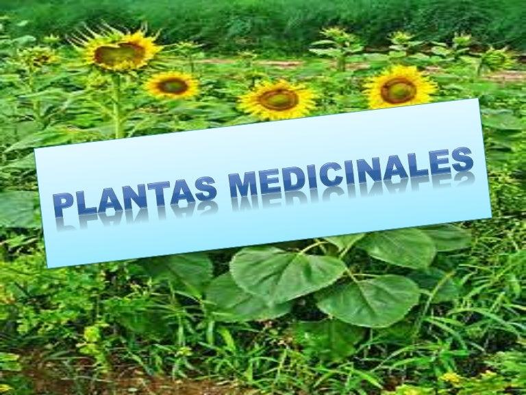 Plantas medicinales for Informacion de plantas ornamentales