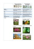Plantas monocotiledónea ciro