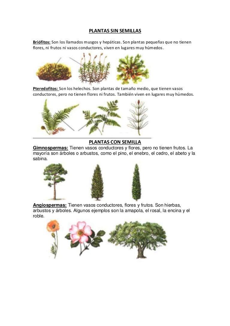 Plantas sin semillas y con semilla - Lista nombre arbustos ...