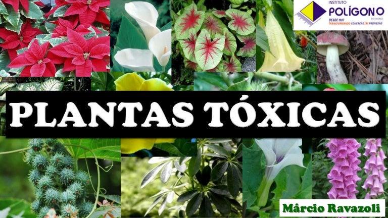 Plantas t xicas for Plantas decorativas con sus nombres