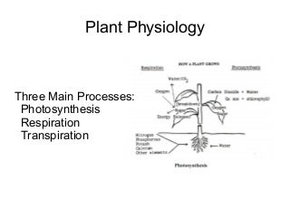 Phd thesis plant physiology