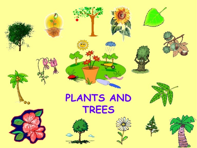 Image result for different types of plants