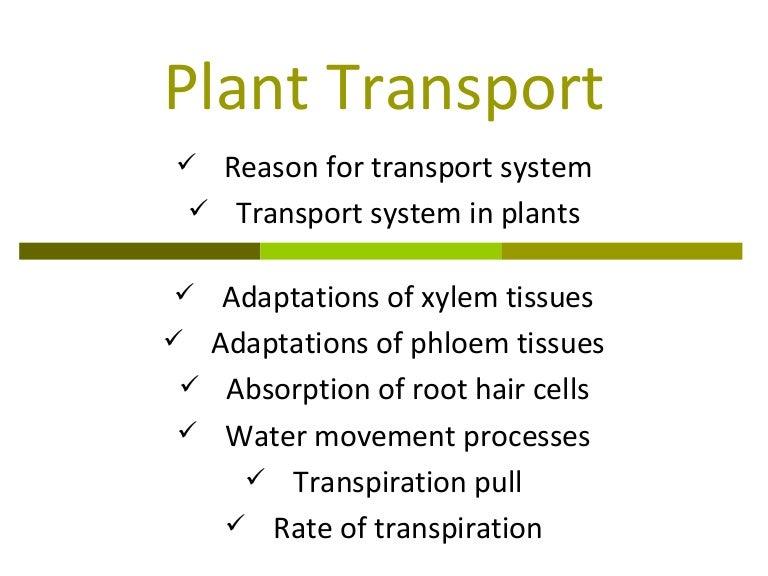 Transport in plants.