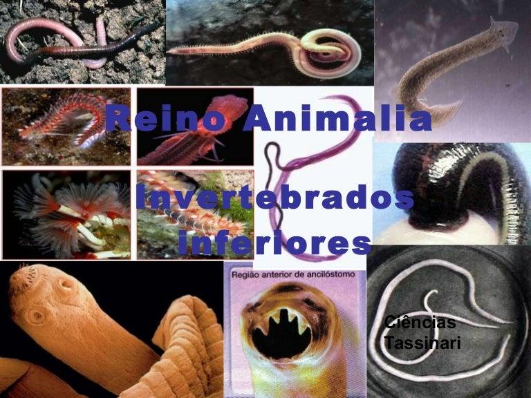 hasonlóság platyhelminthes fonálféreg annelida)