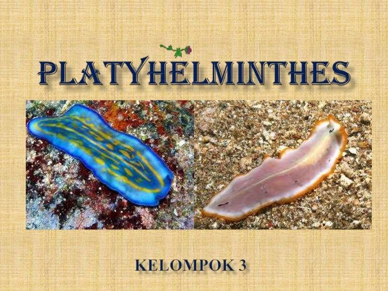 contoh hewan filum platyhelminthes