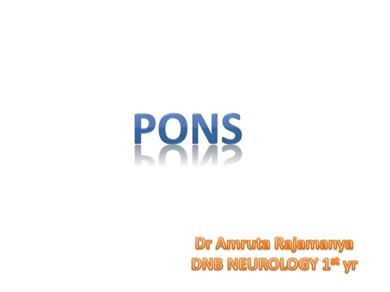Pons Anatomy And Syndromes