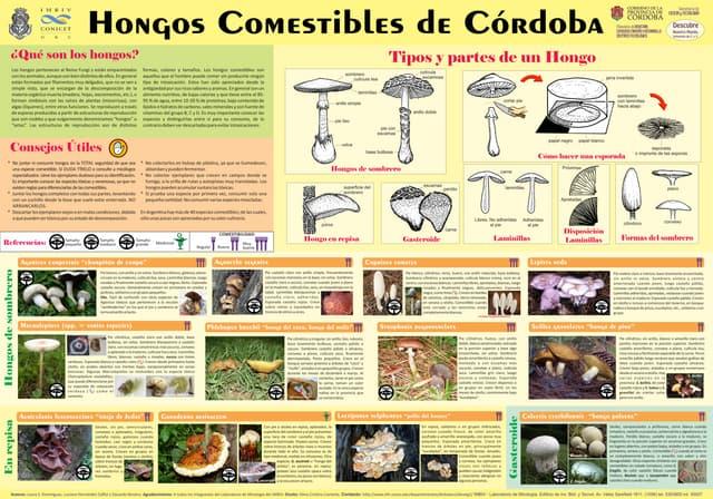 Poster: hongos comestibes de Córdoba (Argentina)