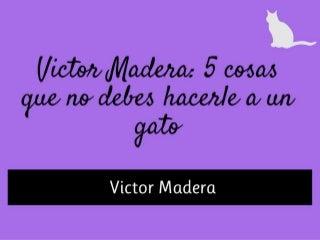 Consejos de Victor Madera: 5 cosas que nunca debes hacerle a un gato
