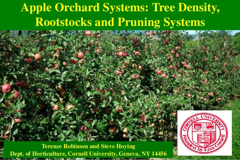 Ppt Fruit Apple Tree Orchard Systems Robinson Cornell 2014 Eng