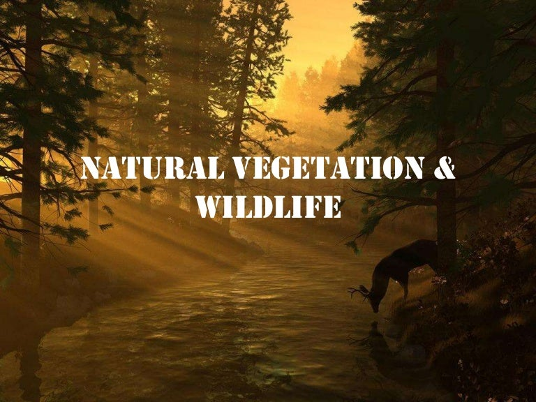 wildlife and natural vegetation Natural vegetation and wildlife : natural vegetation and wildlife presented by- guided by- deepesh mrsshyama basu.