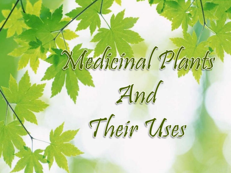 Ppt On Medical Plants And Their Uses By Tanvi Bansal