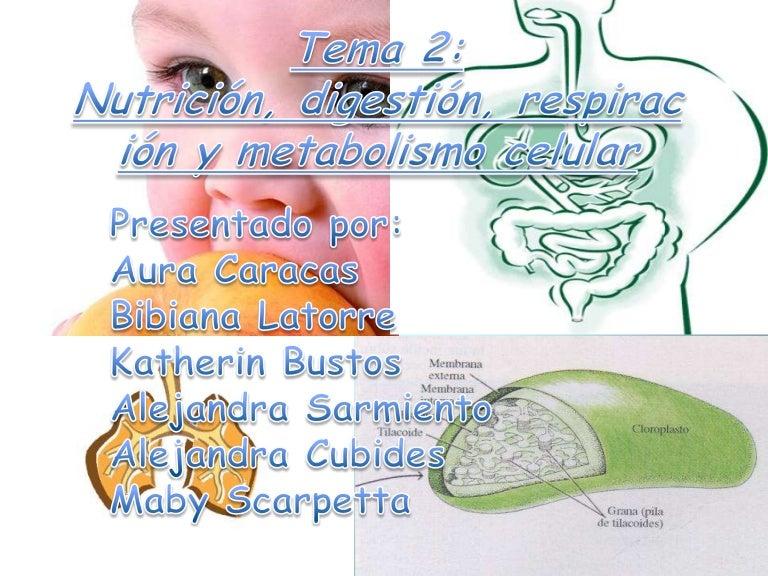dieta metabolismo acelerado libro mejores soluciones