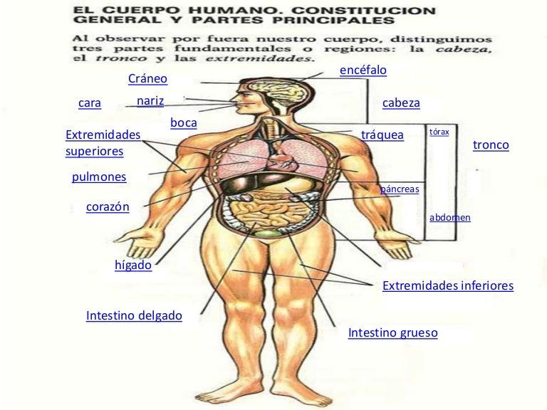 El Cuerpo Humano: Presentacion Cuerpo Humano