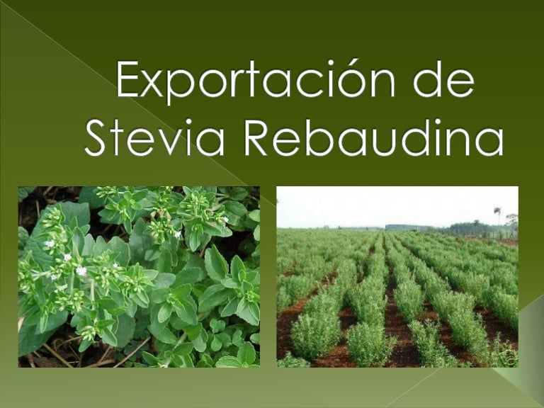 Resultado de imagen para Proyecto de exportación de hoja de Stevia