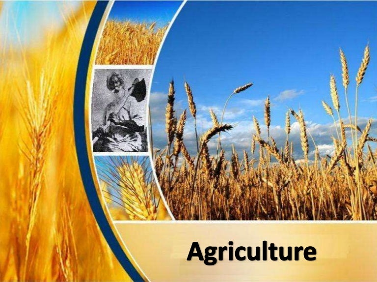 Agriculture in india toneelgroepblik Image collections