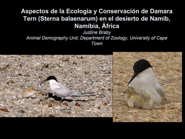Aspectos de la Ecología y Conservación de Damara Tern (Sterna balaenarum) en el desierto de Namib, Namibia, África