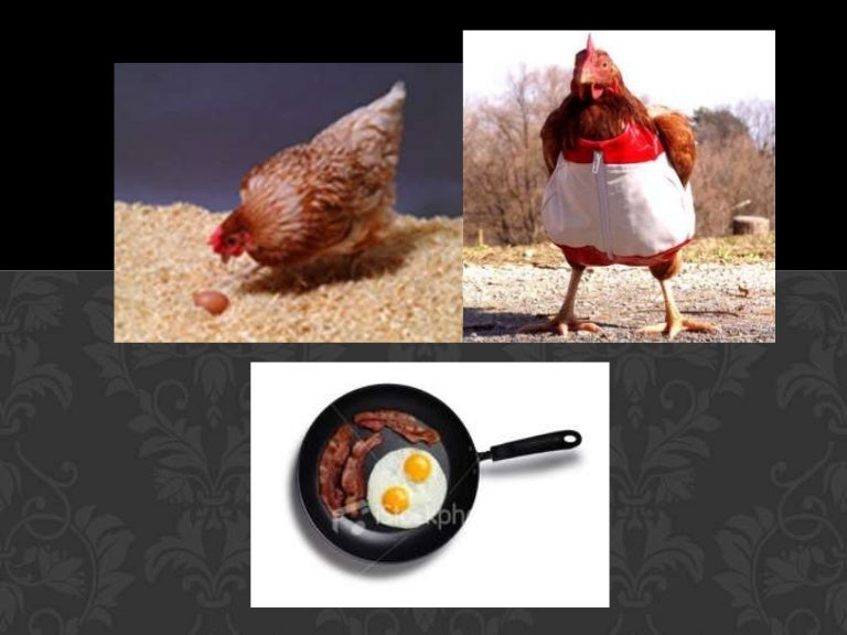 Genetically Modified Chicken