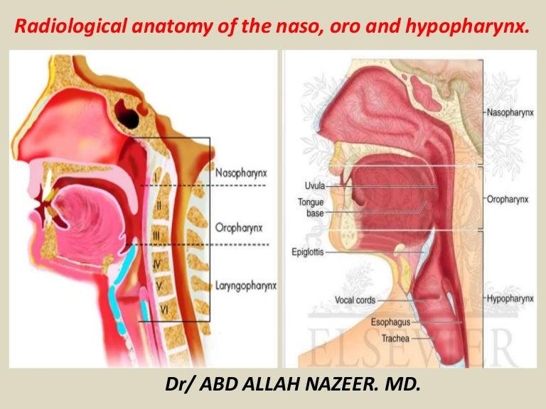 Presentation1pptx Radiological Anatomy Of The Naso Oro And Hypopha