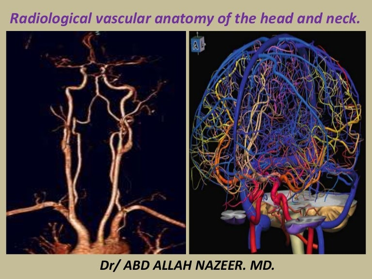 Presentation1.pptx, radiological vascular anatomy of the head and nec…