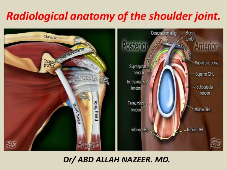 Presentation1.pptx, radiological anatomy of the shoulder joint.