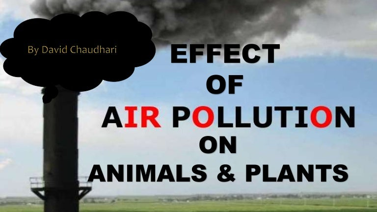 Air Pollution Effect on Animals & PlantsAir Pollution Effects On Animals