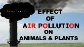 Air Pollution Effect on Animals & Plants