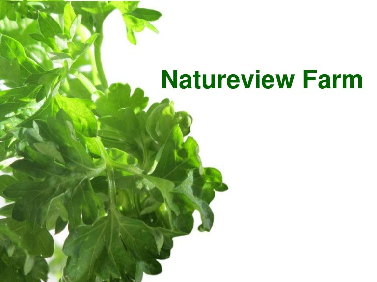 nature view farms case study Home free articles natureview farm case study report therefore option no 3 seems to be the best solution as the natureview farm will not drastically shift from its carefully established channel strategy as the company doesn't have enough power and sufficient recourses for that kind of change.