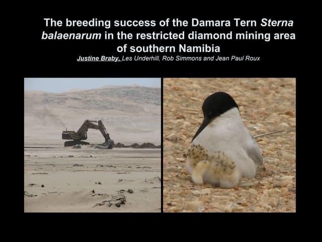 Diamond Mining Impacts on Breeding Damara Terns