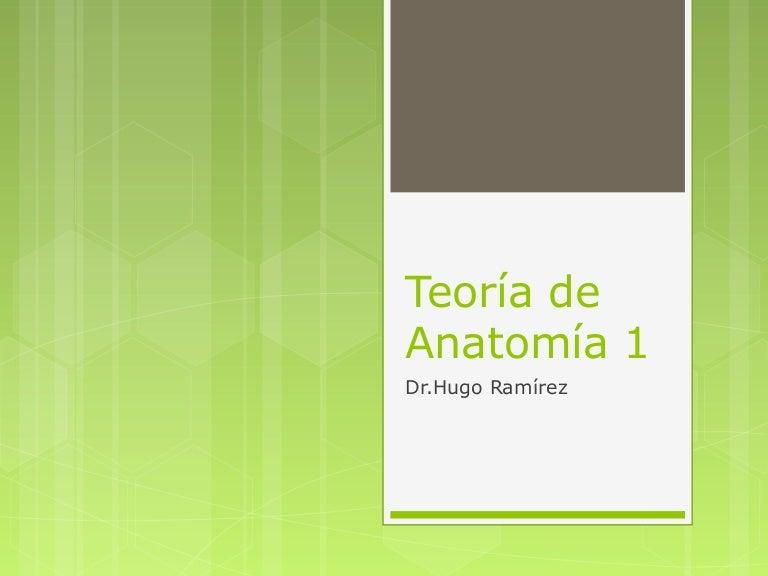 Primera clase, Anatomia general