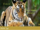 forest and wildlife resource